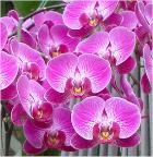 orchids bloom\
